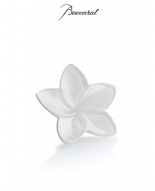 Bloom White (Baccarat)